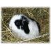 Карликовые Декоративные Кролики из питомника ''mr. Моркoffкин''