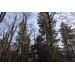 Лесной участок в Стародачном посёлке РАн Новодарьино по низкой цене