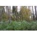 Лесной участок в тихом укромном месте на Николиной горе