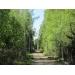 """Продается лесной участок,  Минское - Киевское шоссе,  30 км от МКАД,  ДСК НИИ \\\\\\\""""Радио\\ \\\\\""""."""